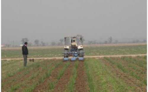 Inter-row Rotary Cultivator for Wide-row Crops